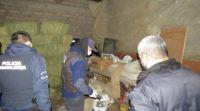 Muerte de un cóndor: realizaron allanamientos para investigar el envenenamiento