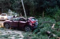 La caída de ramas dejó a dos personas grávemente heridas