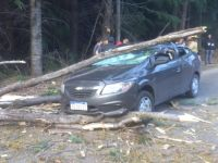Un árbol cayó sobre un vehículo y se salvaron de milagro