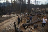 Inicia la restauración de áreas afectadas por los incendios forestales