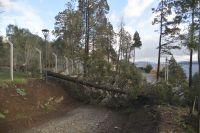 Las intensas lluvias y ráfagas de viento generaron problemas en la ciudad