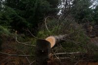 Municipio presentó denuncia penal por tala ilegal en la ladera del Cerro Otto